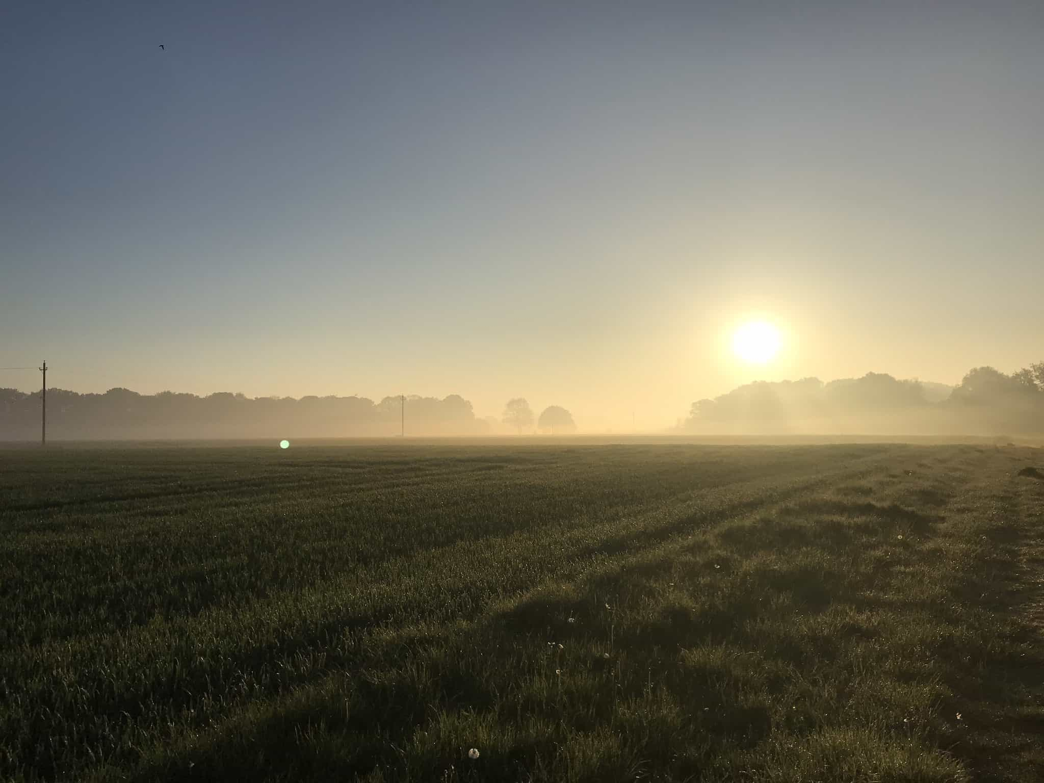 sunrise on the fields at the back of hatfield heath